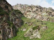 Paisagem bonita com vistas das montanhas rochosas cobertas com a vegetação verde iluminada pelo sol do verão imagens de stock royalty free