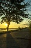 Paisagem bonita da árvore e do nascer do sol foto de stock royalty free