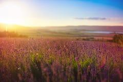 A paisagem bonita da alfazema coloca com o céu dramático durante o por do sol Campo da alfazema sobre o céu do sunser naughty imagens de stock royalty free