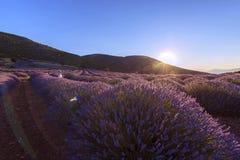A paisagem bonita da alfazema coloca no por do sol do verão perto de Kuy fotografia de stock