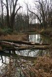Paisagem bonita da floresta, árvores caídas na floresta através do th Imagem de Stock