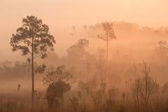Paisagem bonita da floresta do nascer do sol nevoento no salaeng Lua de Thung imagem de stock royalty free