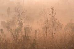 Paisagem bonita da floresta do nascer do sol nevoento no salaeng Lua de Thung imagens de stock