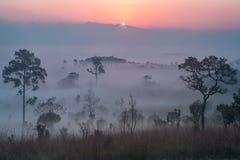 Paisagem bonita da floresta do nascer do sol nevoento no salaeng Lua de Thung fotografia de stock
