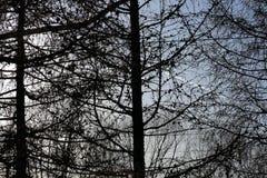 Paisagem bonita da floresta no por do sol backlit Fotos de Stock