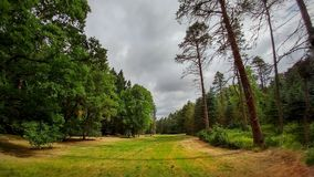Paisagem bonita da floresta no verão Foto de Stock
