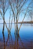 Paisagem bonita da mola As árvores estão na água porque Fotos de Stock