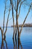 Paisagem bonita da mola As árvores estão na água porque Fotografia de Stock Royalty Free