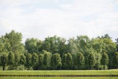 Paisagem bonita da mola com as árvores de salgueiros chorando e de vidoeiros que refletem na superfície da água e iluminada imagens de stock