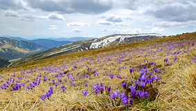 Paisagem bonita da mola em Carpathians, Ucrânia Imagens de Stock Royalty Free