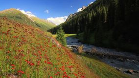 Paisagem bonita da montanha com flores e rio da montanha filme