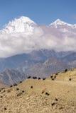 Paisagem bonita da montanha com pastagem de cabras Foto de Stock Royalty Free
