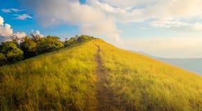 Paisagem bonita da montanha dourada dos campos de grama imagem de stock