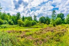 Paisagem bonita da natureza do prado da urze com céu azul e nuvens foto de stock royalty free