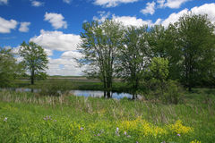 Paisagem bonita da natureza - lagoa, prado, árvores Foto de Stock Royalty Free