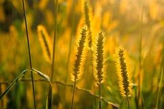 Paisagem bonita da natureza, plantas no por do sol dourado Imagens de Stock Royalty Free