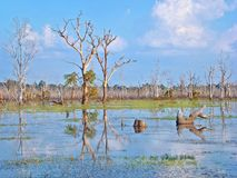 Paisagem bonita da seiva de Tonle, Camboja fotografia de stock royalty free