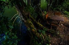 Paisagem bonita das árvores com luz suave natural na floresta em Kanchanaburi, Tailândia foto de stock