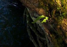 Paisagem bonita das árvores com luz suave natural na floresta em Kanchanaburi, Tailândia imagens de stock royalty free