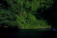 Paisagem bonita das árvores com luz suave natural na floresta perto do rio Kwai Noi em Kanchanaburi, Tailândia imagens de stock royalty free