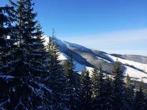 Paisagem bonita das montanhas e da floresta Foto de Stock