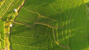 A paisagem bonita de campos do arroz imagem de stock