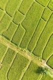 A paisagem bonita de campos do arroz Foto de Stock