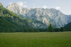 Paisagem bonita de cumes julianos no Eslovênia Floresta Spruce em um prado gramíneo fotografia de stock royalty free