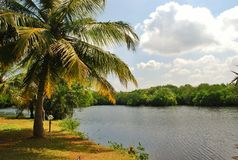 Paisagem bonita de Sri Lanka Fotos de Stock