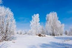 Paisagem bonita do inverno com árvores imagens de stock royalty free