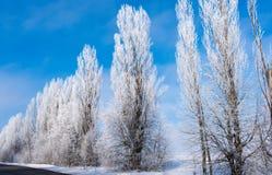 Paisagem bonita do inverno com árvores imagens de stock