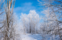 Paisagem bonita do inverno com árvores fotografia de stock