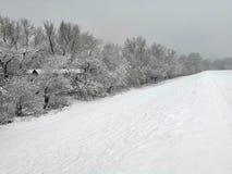 Paisagem bonita do inverno com árvores cobertos de neve imagem de stock royalty free