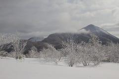 Paisagem bonita do inverno com árvores cobertos de neve Foto de Stock Royalty Free