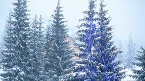 Paisagem bonita do inverno com árvores cobertos de neve Montanhas do inverno vídeos de arquivo