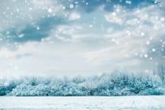 Paisagem bonita do inverno com árvores congeladas e campo coberto de neve no fundo do céu Fotografia de Stock