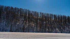 Paisagem bonita do inverno com neve da montanha em Biei, Hokkaido Imagens de Stock Royalty Free
