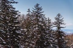 Paisagem bonita do inverno com neve da montanha em Biei, Hokkaido imagem de stock