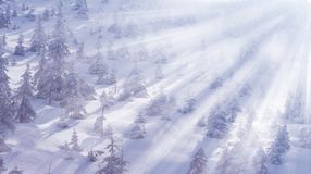 Paisagem bonita do inverno com neve e abeto nas montanhas Inverno mágico foto de stock royalty free