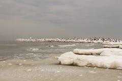 Paisagem bonita do inverno com quebra-mar nevado e gelo, mar Báltico Imagens de Stock Royalty Free