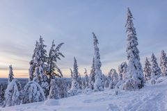 Paisagem bonita do inverno de Finlandia do norte Fotografia de Stock Royalty Free