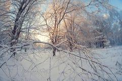 Paisagem bonita do inverno, floresta nevado em um dia ensolarado, distorção do olho de peixes, árvores nevados altas com um céu a imagem de stock