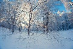 Paisagem bonita do inverno, floresta nevado em um dia ensolarado, distorção do olho de peixes, árvores nevados altas com um céu a foto de stock royalty free