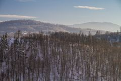 Paisagem bonita do inverno na floresta Imagens de Stock Royalty Free