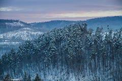 Paisagem bonita do inverno na floresta fotos de stock royalty free
