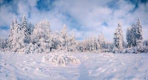 Paisagem bonita do inverno na floresta da montanha imagens de stock royalty free