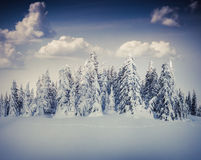 Paisagem bonita do inverno na floresta da montanha Fotografia de Stock