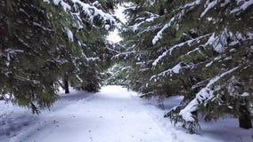 Paisagem bonita do inverno no parque Mazurino vídeos de arquivo