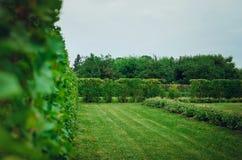 Paisagem bonita do jardim do verão Arbustos e árvores exatamente aparados foto de stock