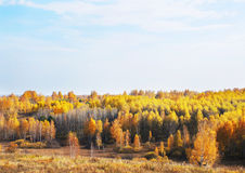 Paisagem bonita do outono no dia ensolarado Foto de Stock